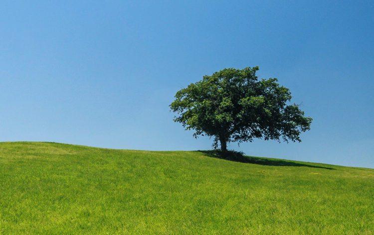 Contribuisci alla conservazione dell'ambiente post image