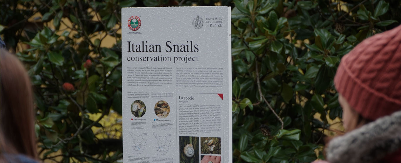Italian snails conservation project