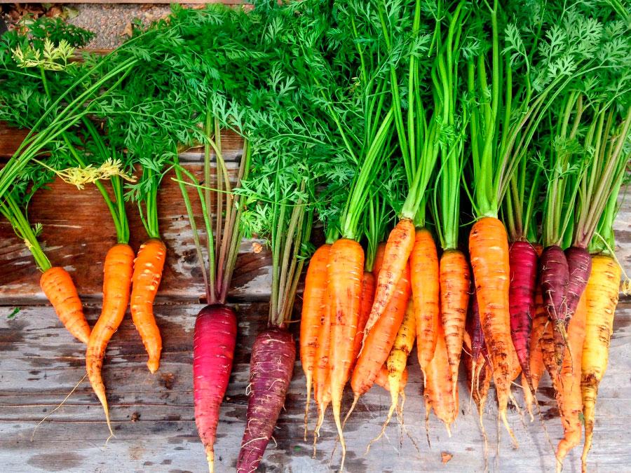 banner_small_agricoltura_sostenibile_6