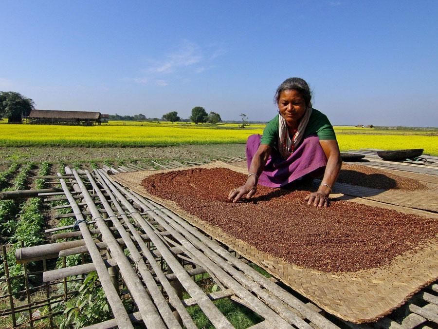 banner_small_significato_agricoltura_sostenibile