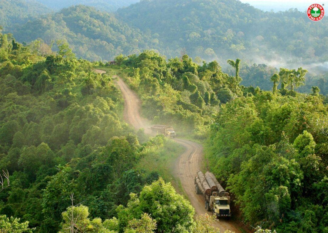 Friend of the Earth lancia petizione contro la distruzione della foresta del Bacino del Congo da parte di produttori di olio di palma e gomma. post image