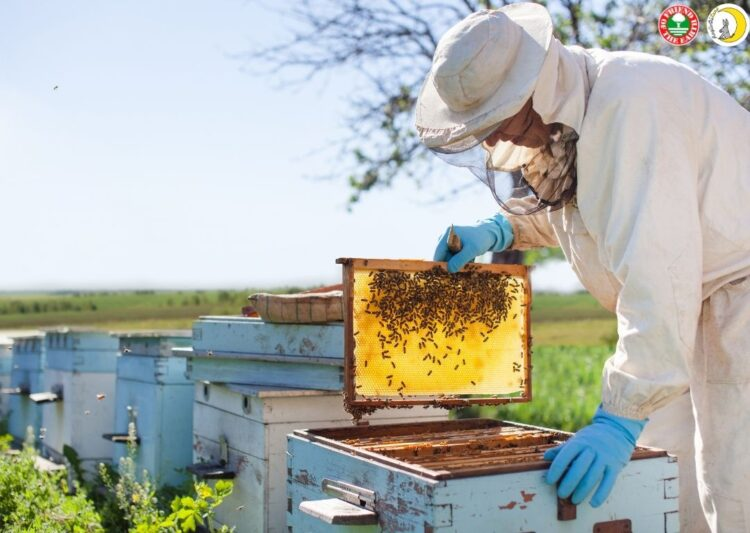 "Webinar on ""Sustainable Beekeeping. Case Study Raglio di Luna""- 26th of May 2021 at 3:00 pm in Milan, CET"