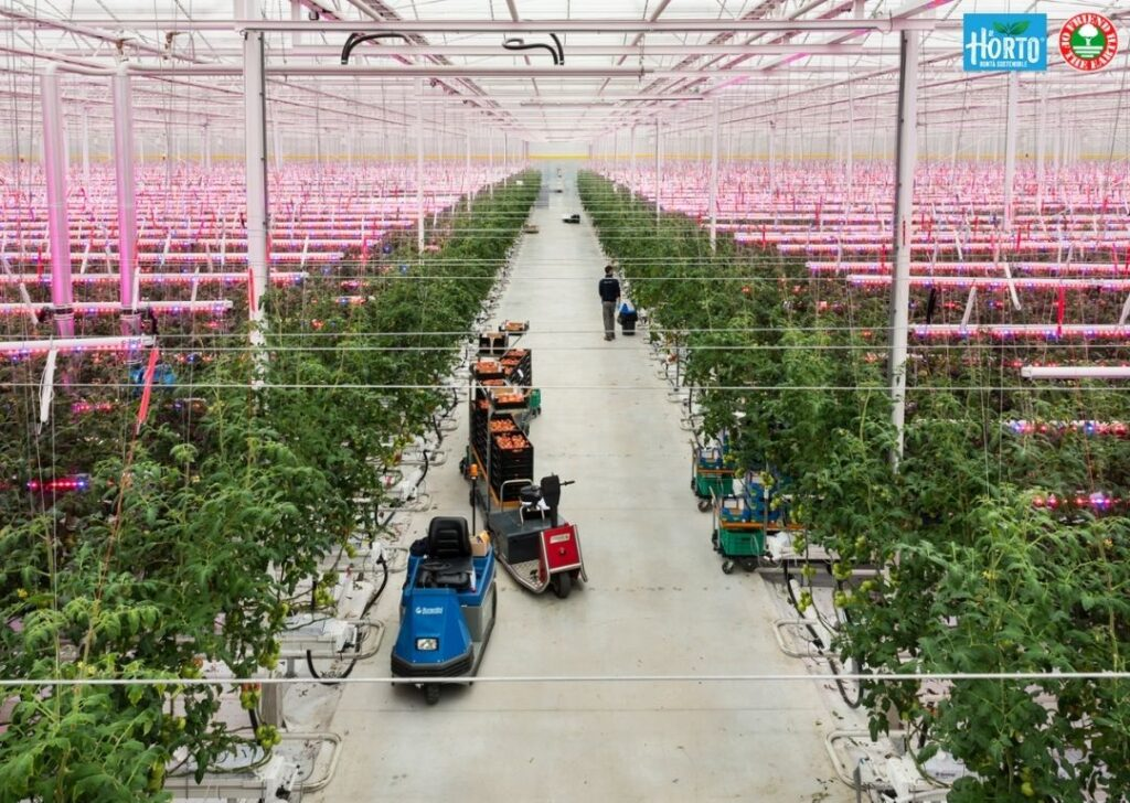 Webinar on Hydroponics: leading the way towards a more sustainable agriculture – H2orto Fri-EL. Tomato production in hydroponics. 27th January 2021 3pm CET