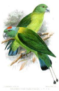 save parrot1