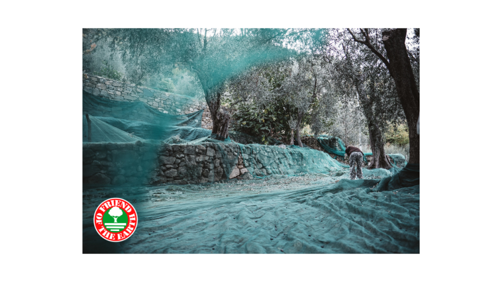 Sustainable Olive Oil Production. The Olio Roi case study