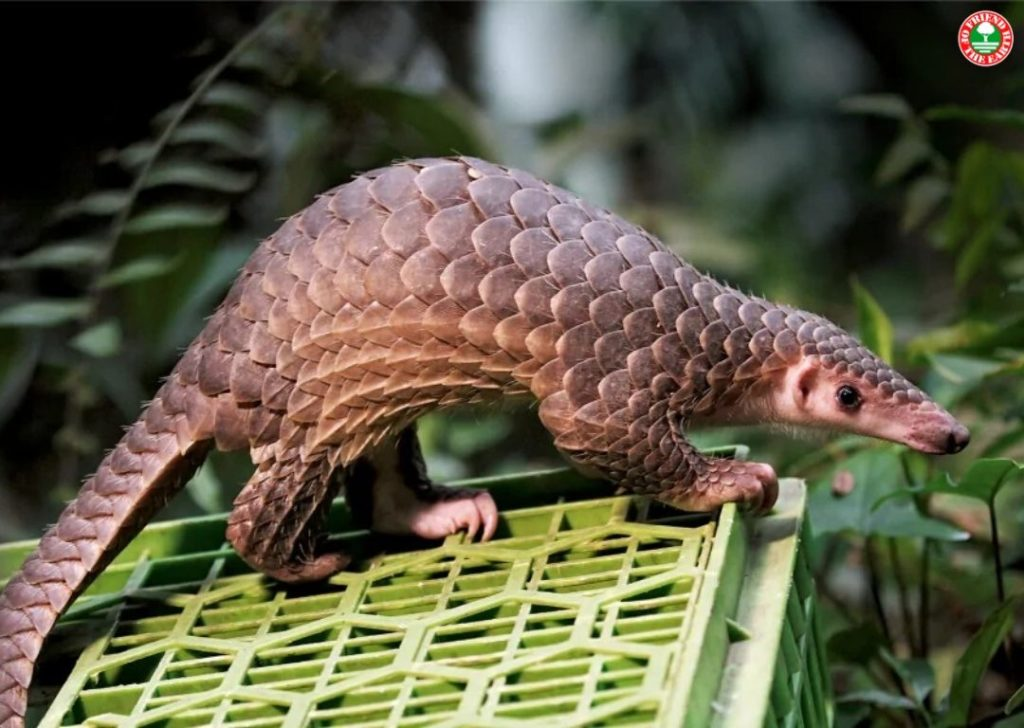 New Petition Asks Chinese and Vietnamese Governments to Enforce Pangolin Trade Ban