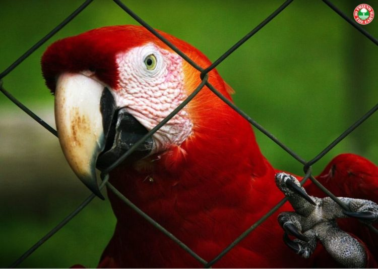 MAY 31st, 2020 World Parrots Day – New Petition Demands Ends to Illegal Trade in Wild Parrots post image